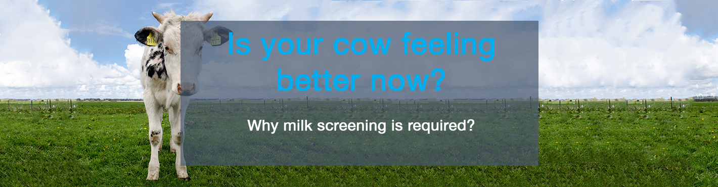 Is your cow feeling better now?